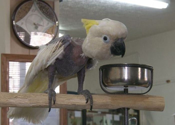 Cockatoo from a Meth Lab (3 pics)