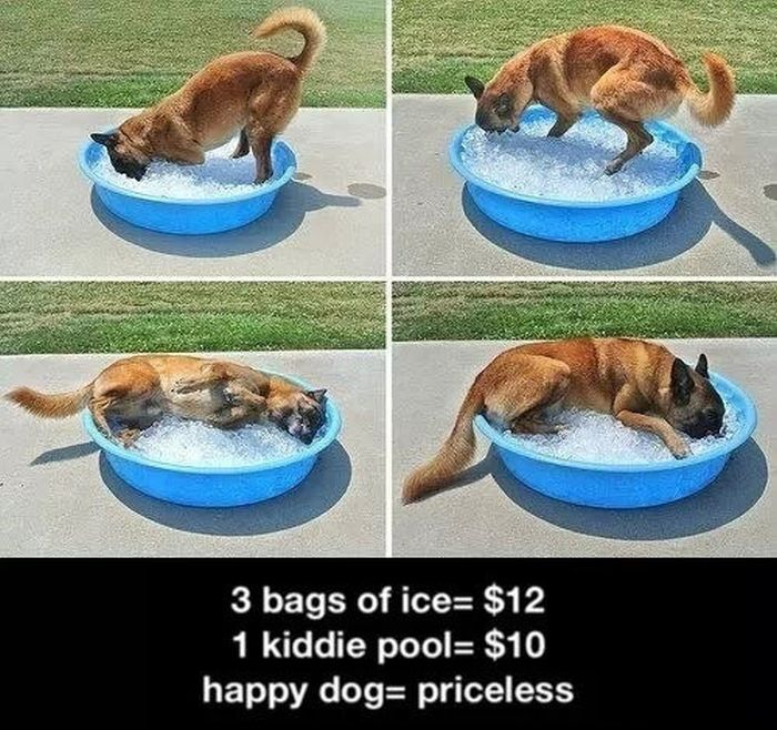 Random Dogs (45 pics)