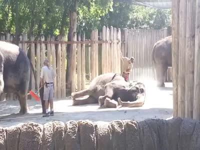 Elephants Taking Bath