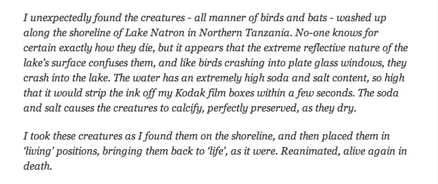 Amazing and Deadly Lake Natron in Tanzania (8 pics)