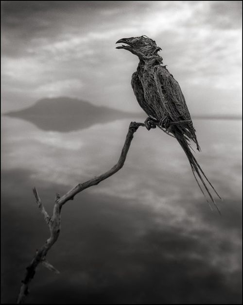 Amazing and Deadly Lake Natron in Tanzania (8 pics)