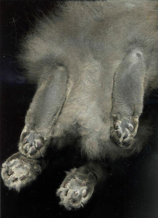 The Cat Scan (36 pics)