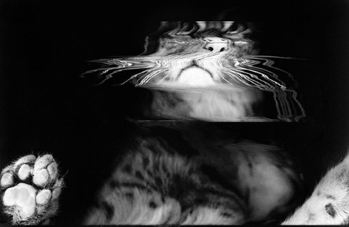The Cat Scan (36 pics)