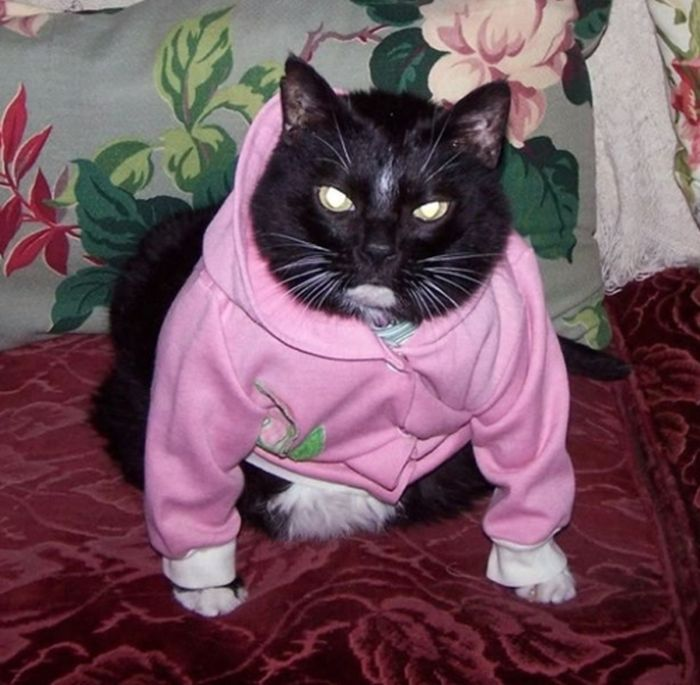 Dressed Animals (41 pics)
