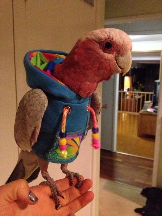 Dressed Animals (41 pics)