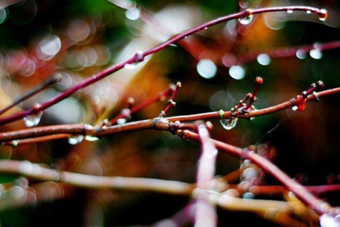 Beautiful Fall (37 pics)