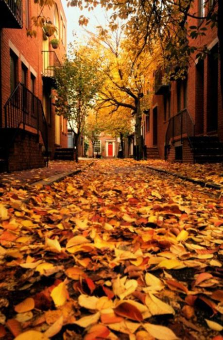 Beautiful Fall (37 pics)