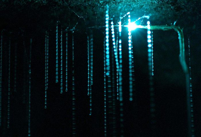 Starry Night Sky Created by Glowworms (11 pics)