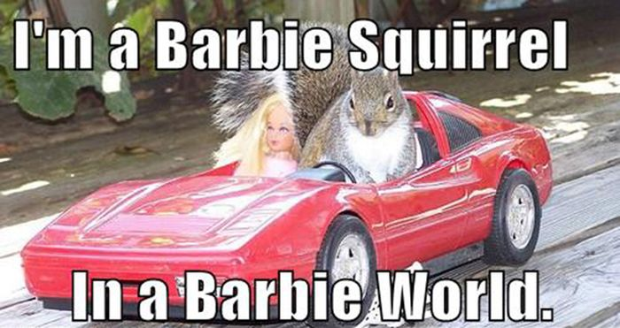 Replace it with Squirrel (24 pics)
