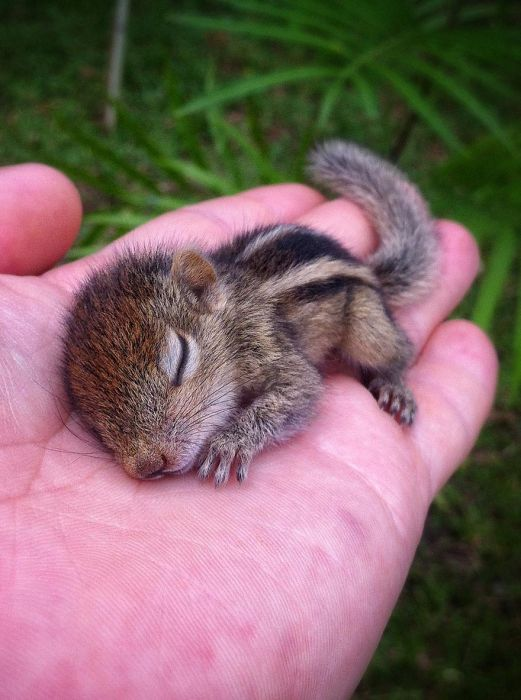 Abandoned Baby Squirrel Rescued (17 pics)