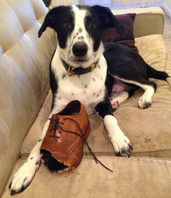 How to Sell Shoes Chewed by Dog (7 pics)