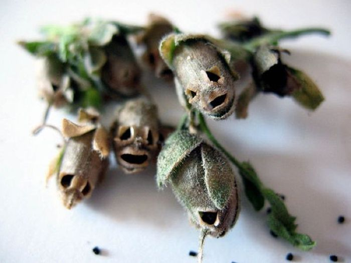 Evil Flowers (7 pics)