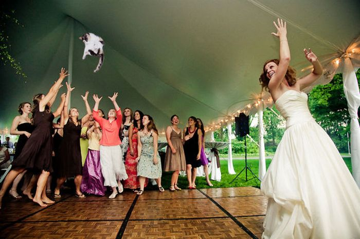 Brides Throwing Cats (17 pics)