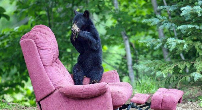 Very Creative Photos of a Bear Family (15 pics)