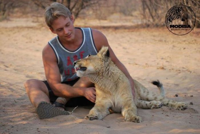 Living with Lions (37 pics)