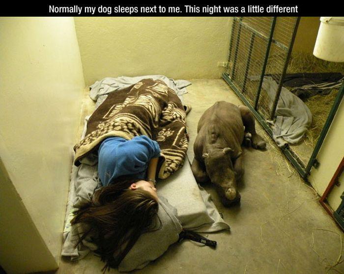 Funny Dog Photos (26 pics)