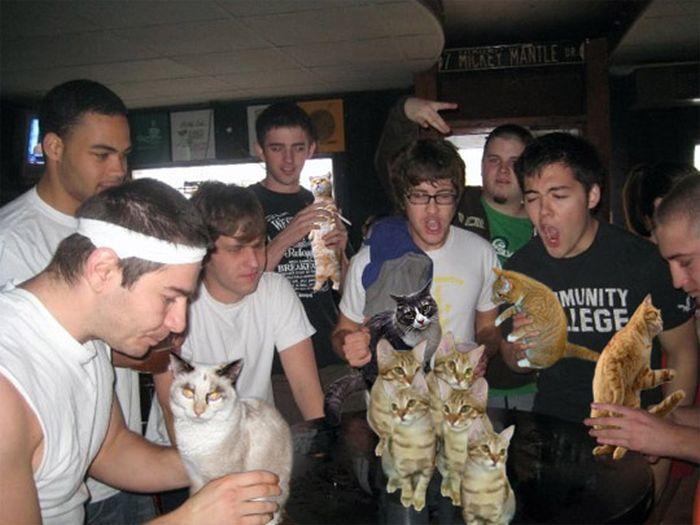 Booze Cats (15 pics)