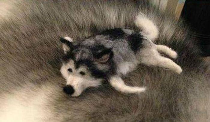 Husky Doll (8 pics)