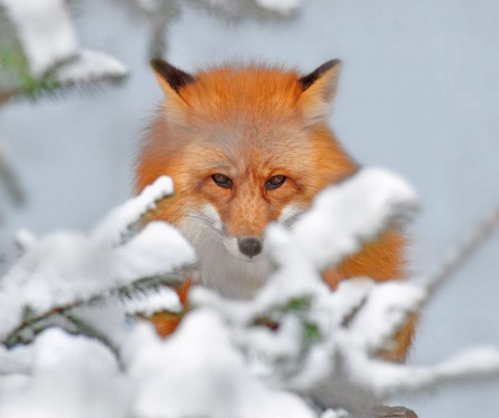 Animal Photos (43 pics)