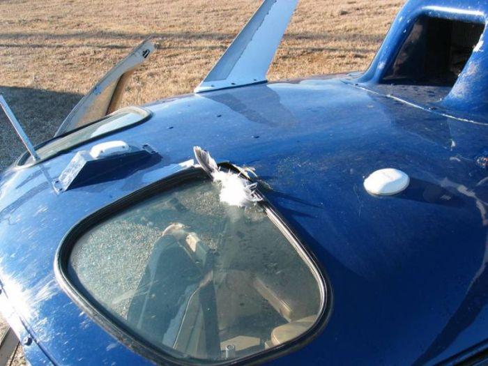 Helicopter vs Birds (23 pics)