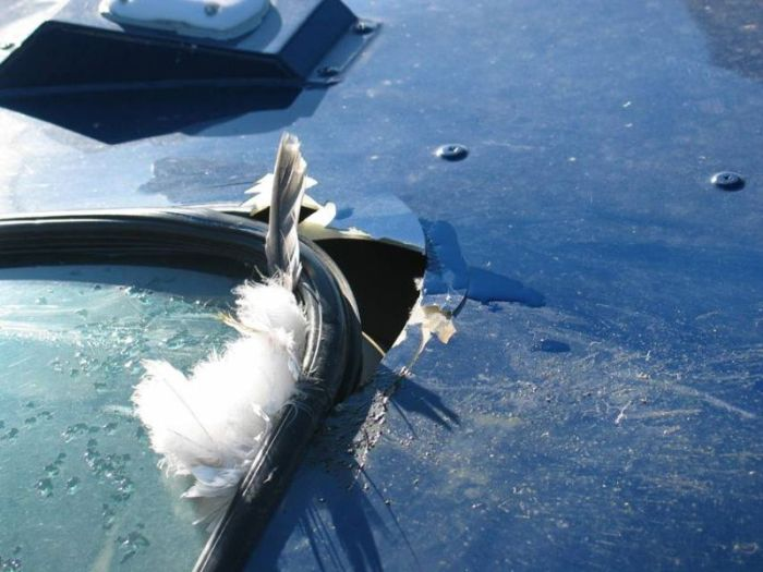 Helicopter vs Birds (23 pics)