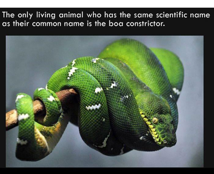 Interesting Facts. Part 7 (27 pics)