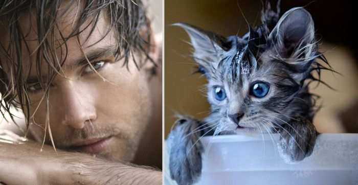 Hot Men And Their Feline Counterparts. Part 2 (26 pics)
