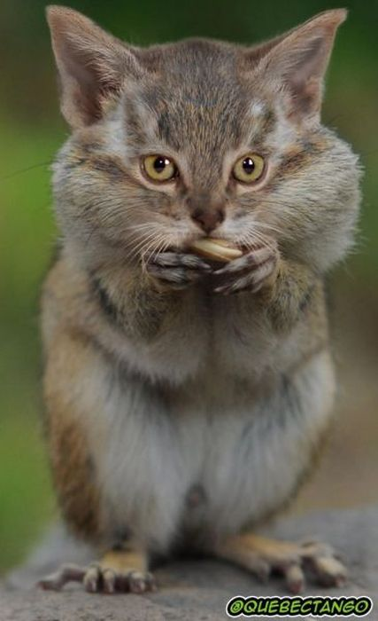 Animal Mashups (28 pics)