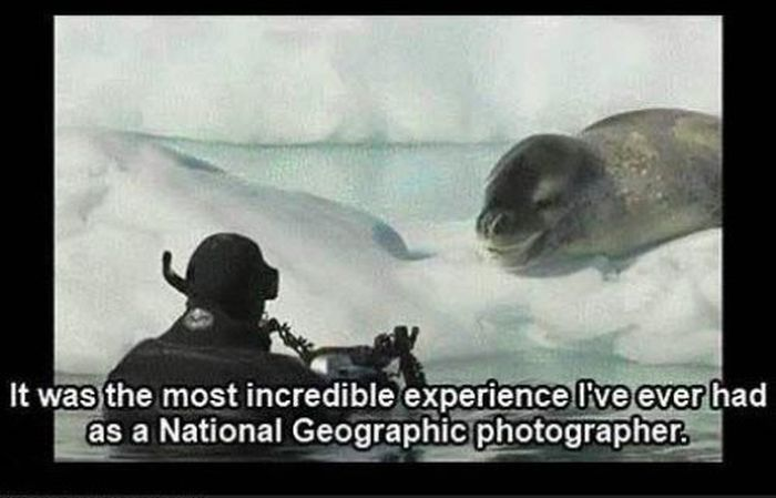Friendly Leopard Seal and a Photographer (10 pics)