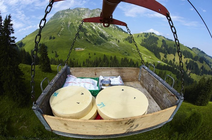 The Making of the Real Swiss Cheese (23 pics)