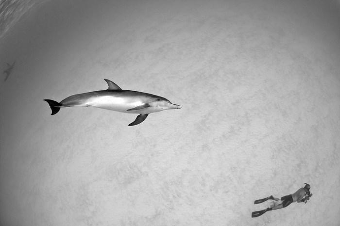 Great Underwater Photos (30 pics)