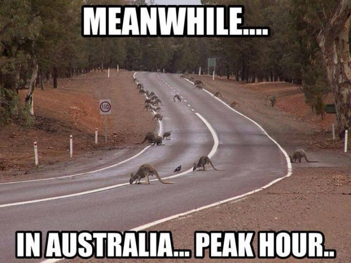 Meanwhile in Australia (44 pics)