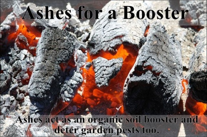 Lifehacks for Your Garden (25 pics)
