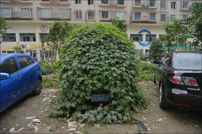Zombie Car (4 pics)