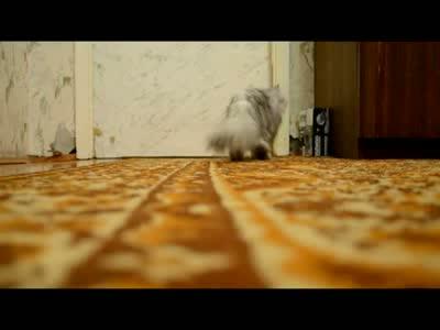 How Cat Opens a Door