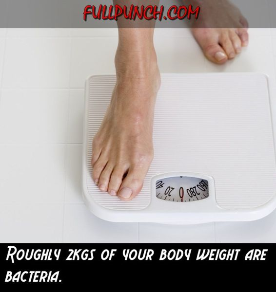 Interesting Facts about Your Body (23 pics)