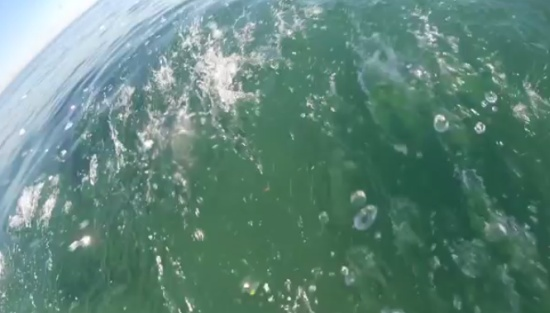 Never Know Who Waits For You Underwater While You Are Surfing