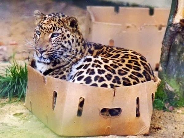 Cool Animals (28 pics)