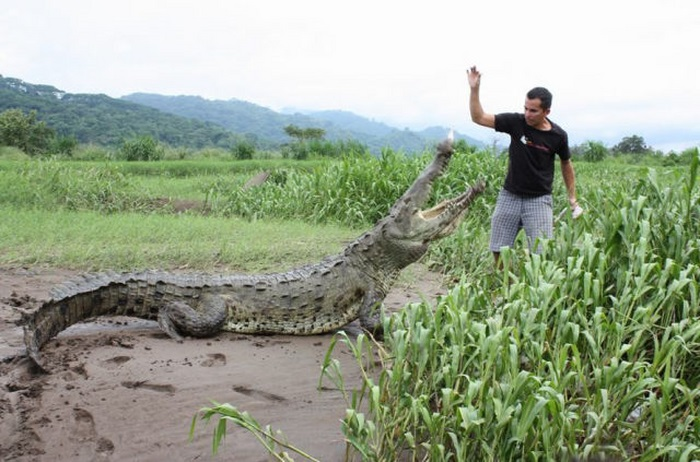 This Guy Is Not Afraid of Crocodiles (20 pics)
