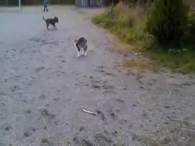 Cat Scares a Puppy