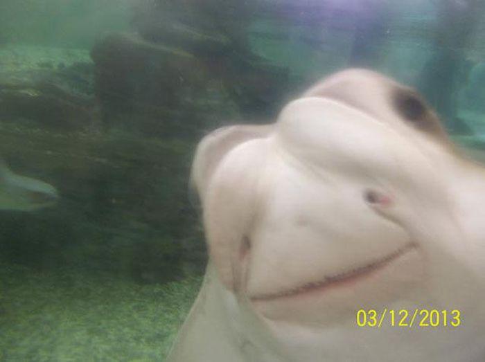 Funny Animal Photobombs (25 pics)
