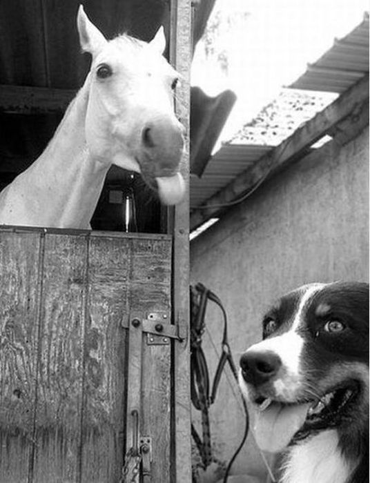 Funny Animal Photobombs (25 pics)