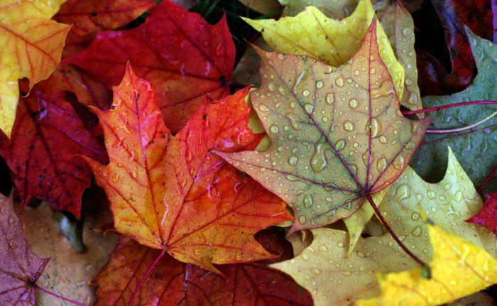 Beautiful Fall (40 pics)