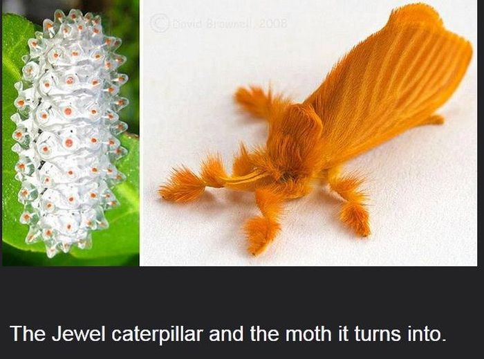 Interesting Science Facts and Photos (54 pics)