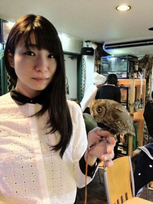 Owl Cafe (38 pics)