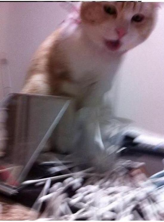 Bully Cat (5 pics)