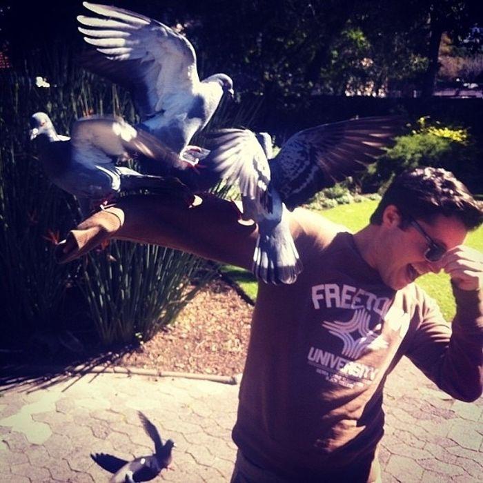 Don't Feed Pigeons (22 pics)