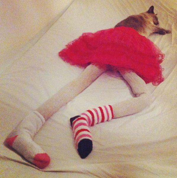 Cats Wearing Tights (22 pics)