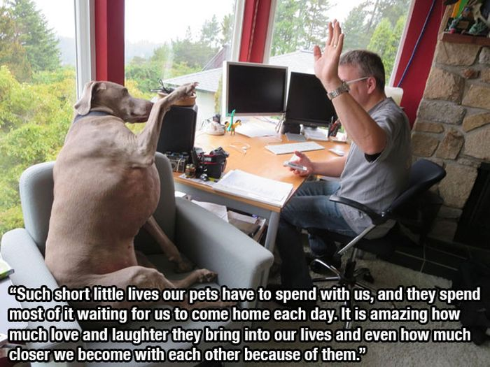 This Post Is for All Dog Lovers (14 pics)