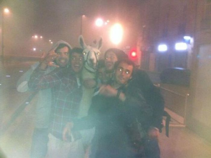 French Teens Partying with a Llama (8 pics)